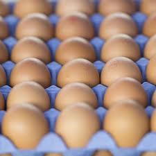 Eggs – dozen
